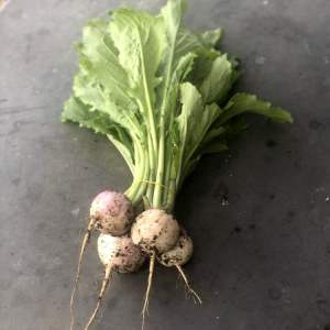 Worton's Finest New Seasons Turnips