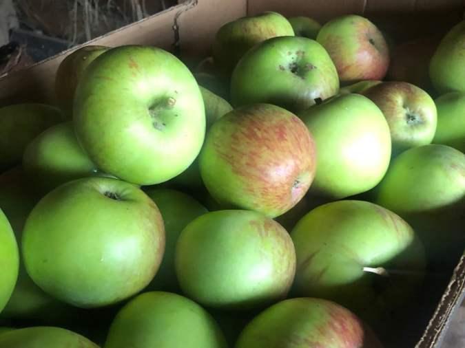 apples-apples-apples