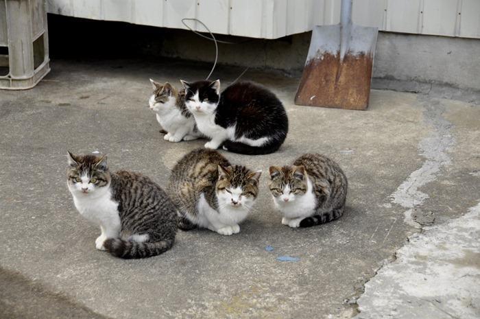 Cat island Tashirojima in Japan  Behind Your Screen