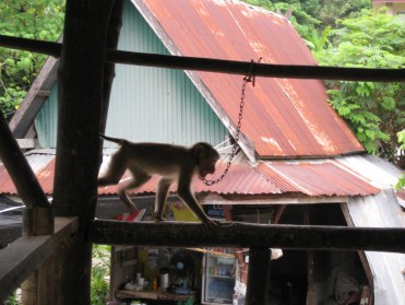 Chained Monkey: our first clue that we shouldn't be there.