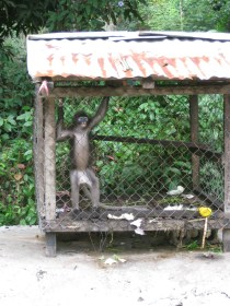 Caged Monkey: he (she?) spent the whole time we were there going batshit crazy in his cage.