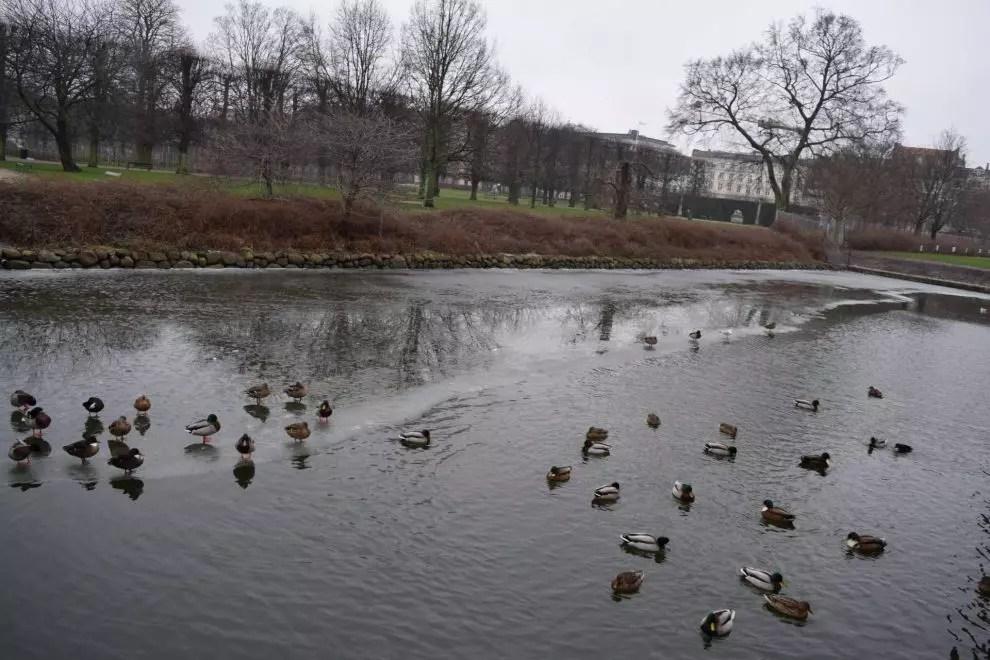 Ducks at Rosenborg Castle