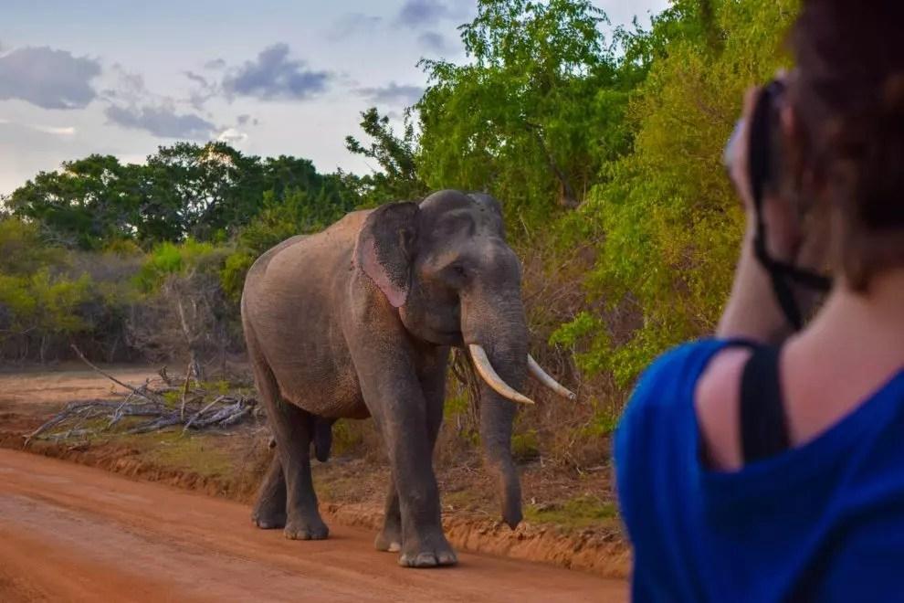 Elephant in Yala National Park
