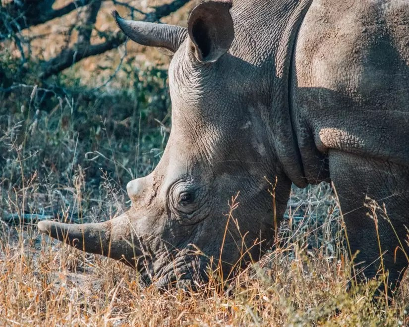 Africa on Foot: Safari