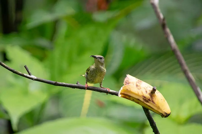 Would Be Traveller 10 days in Costa Rica itinerary Ecocentro Danaus