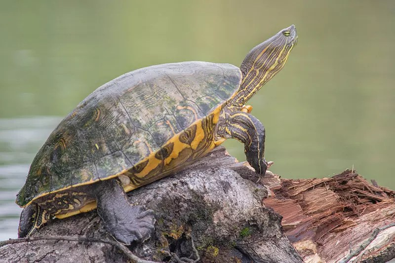 Would Be Traveller 10 days in Costa Rica itinerary Tortuguero Turtles