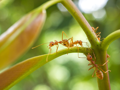 What are Fire Ants Bites Symptoms and How to Treat Fire
