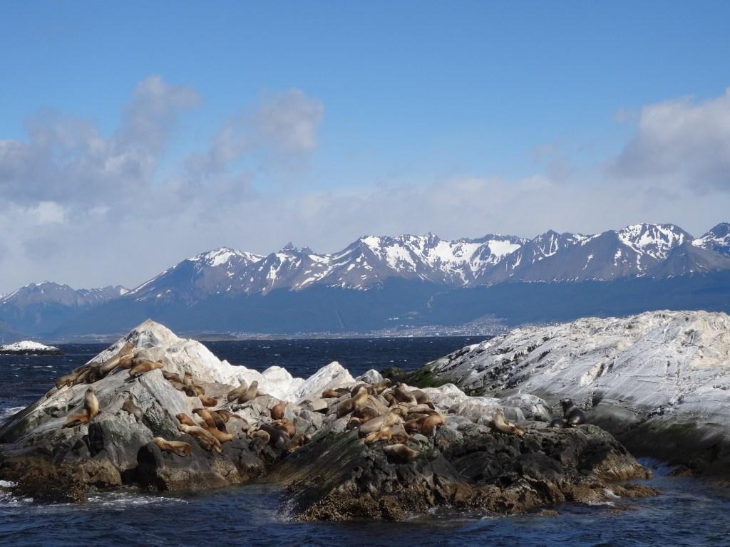 Sealions Ushuaia Tierra del Fuego, Patagonia Argentina
