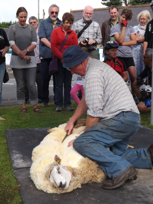 FC - shearing