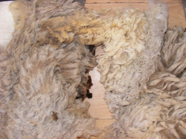 Freyalyn_washing_wool (8)
