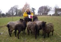 From sheep to shawl at Beech Hill Farm | Wovember
