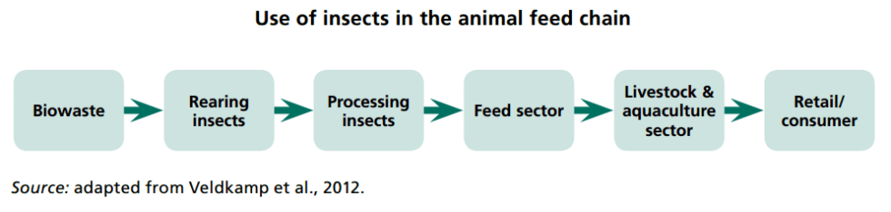 Use of Insects in the Animal Feed Chain