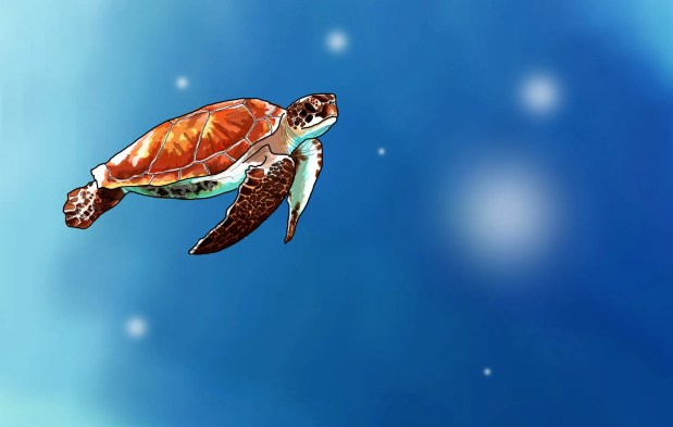 Illustration of a turtle by illustrator and junior designer, Chloe Greenwood