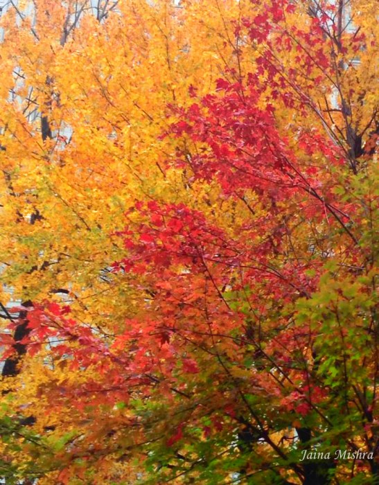 Colors of Fall - Montreal -Jaina Mishra - 2014