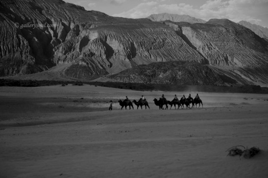 Camel Caravans on the Old Silk Route