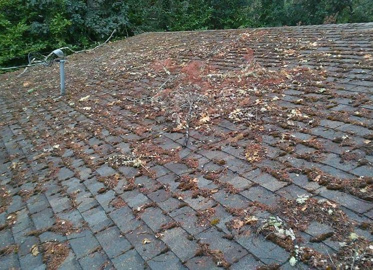 Before Roof Clean Up in Delaware