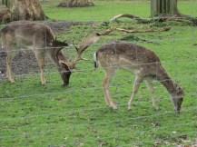 9.Royal deers_Greenwich Park_Wowing Emoji
