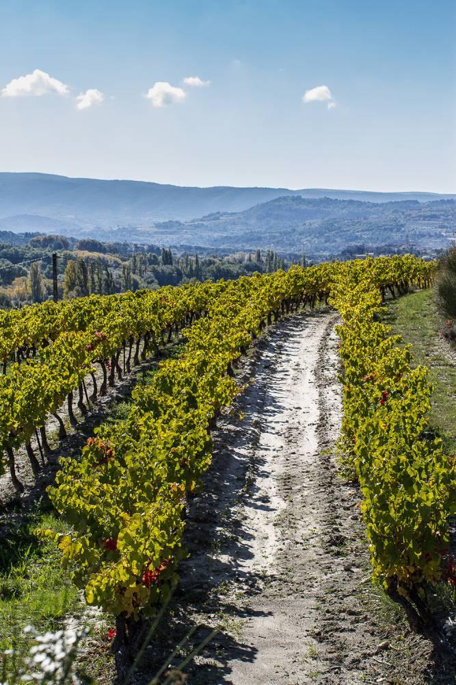 微醺夏日!南法隆河谷葡萄酒之旅 | La Vie