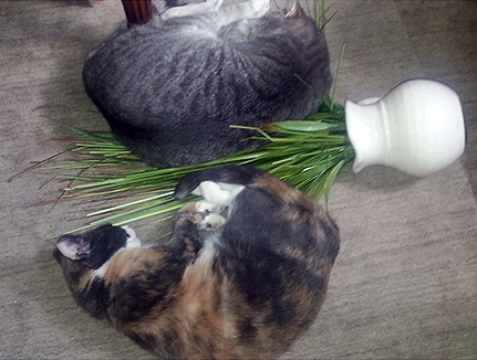 Cats attack houseplant
