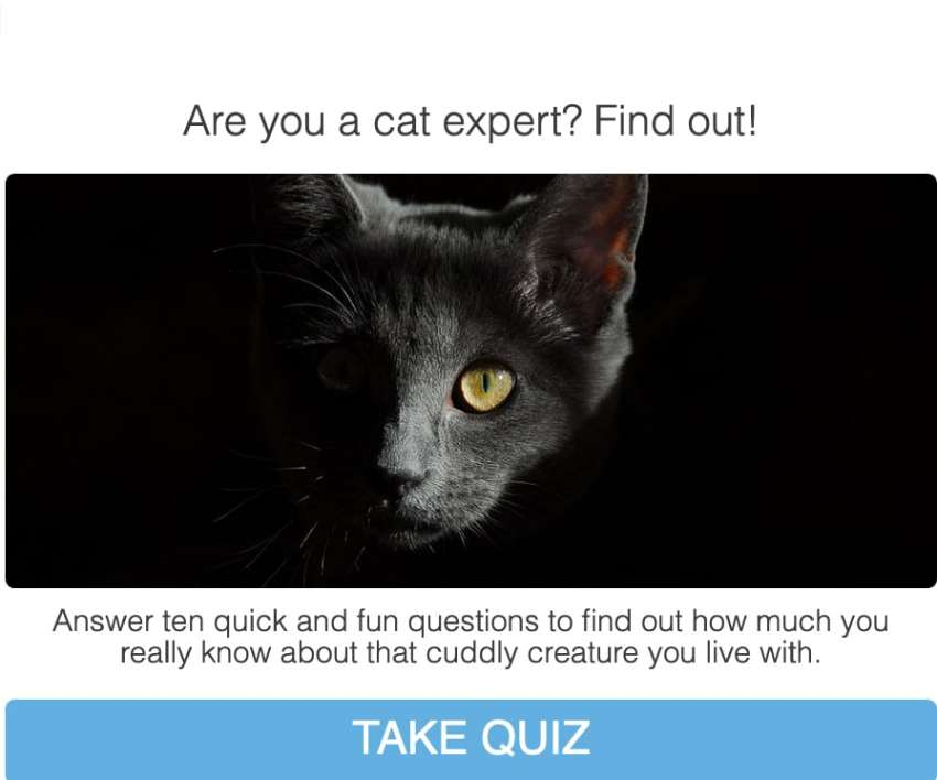 cat quiz screenshot