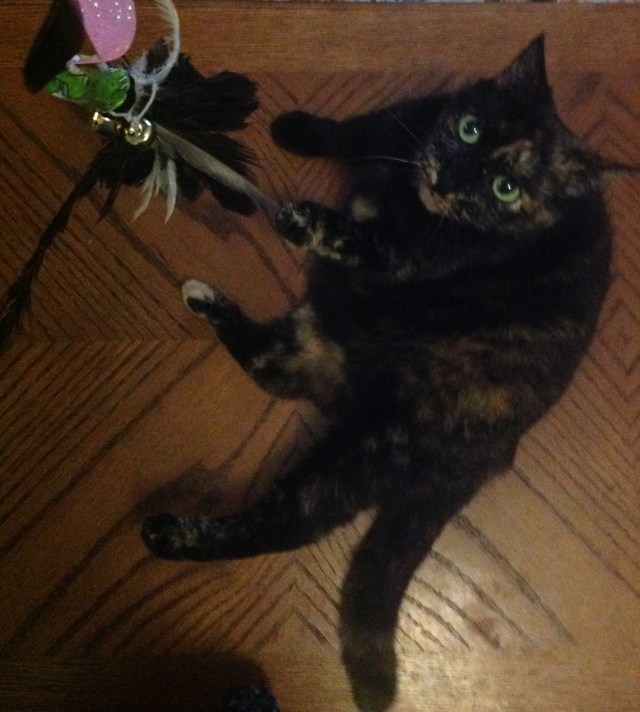 cat playing with chicken feather toy