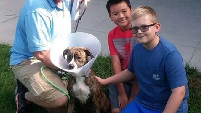 dog coming to new home after adoption