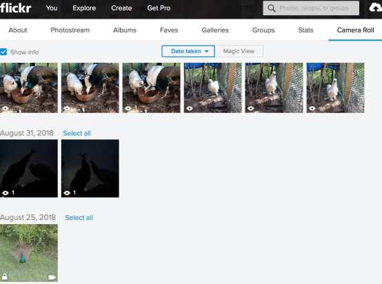 Screenshot of flickr with pet photos
