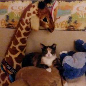 cat posing with stuffed animals