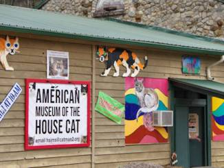 Exterior photo of American Museum of the House Cat