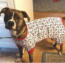 Meadow sporting some holiday pjs.