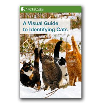 A Visual Guide to Identifying Cats cover