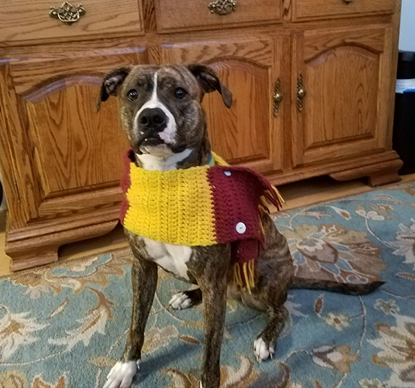 Meadow wearing scarf