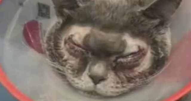cat after eye surgery fake photo
