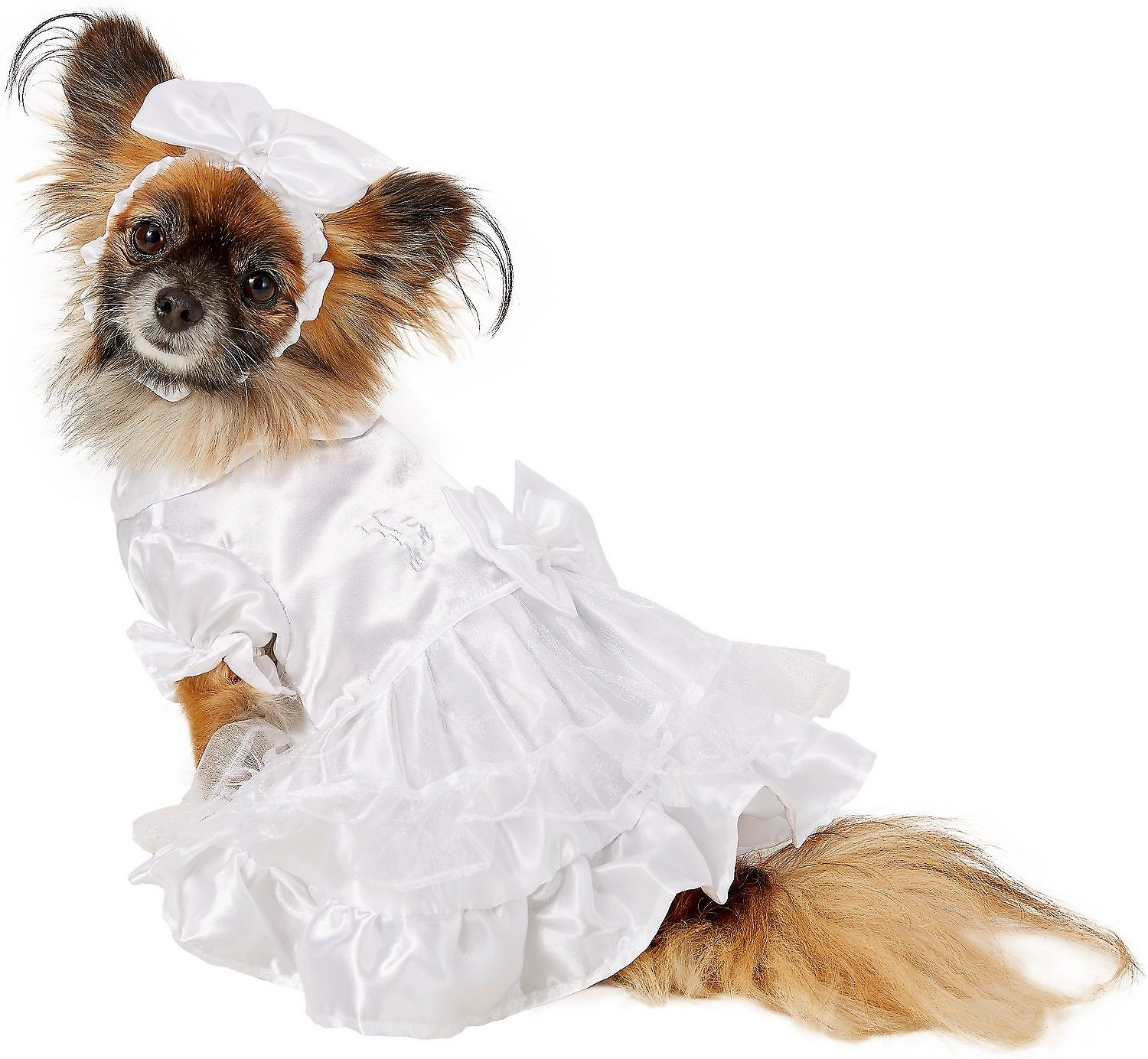 dog in chewy.com wedding dress