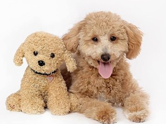 Dog with Heartbeat Bear Dog