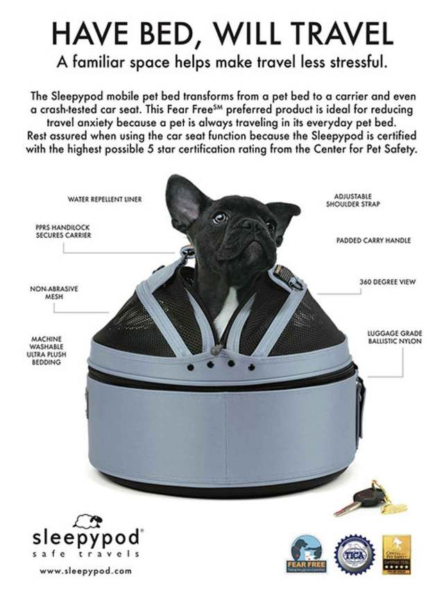 Dog in travel carrier/bed