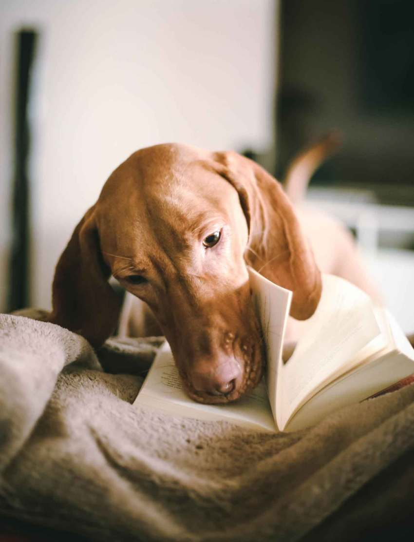 Dog looking at book
