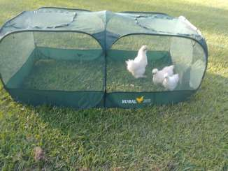 chickens in Rural 365 tent