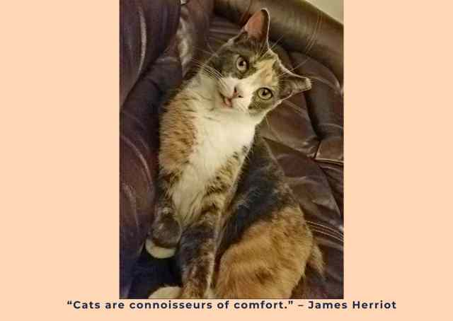 cat on leather couch with Herriot quote