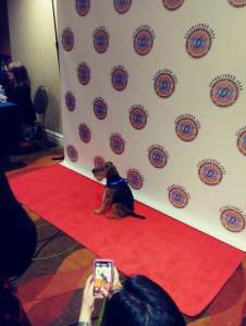dog on red carpet at DWA banquet