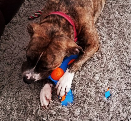 Meadow chewing Nerf durable rubber dog toy