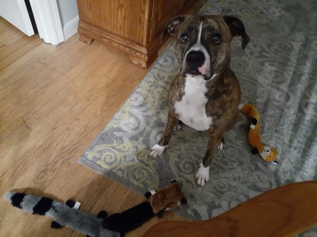 Meadow with three of her new toys lined up