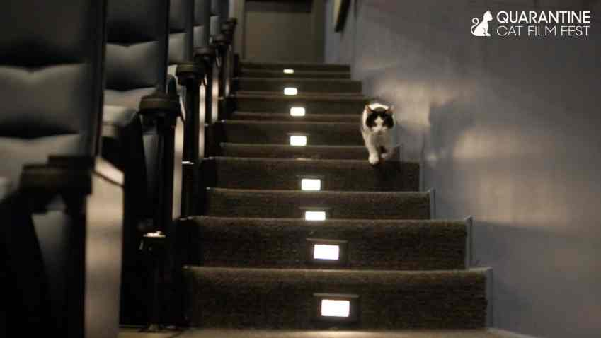 cat walking down theater steps
