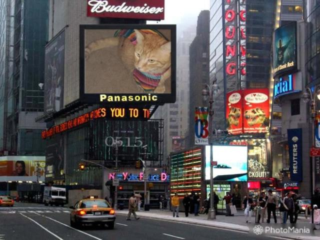 cat displayed on Panasonic display in Times Square