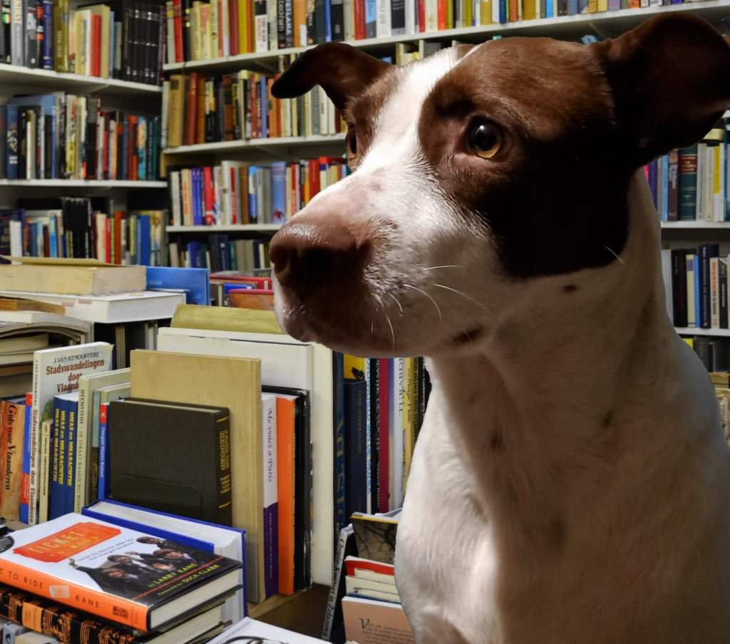 dog with lots of books in background