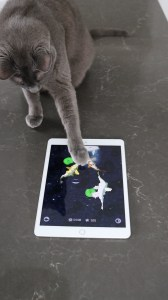 Enzo the cat playing with app