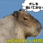 原宿で生カピバラを抱ける!動物園カフェがヤバいw(2019割引情報も)