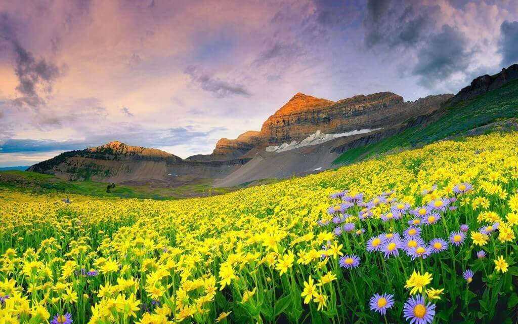 11 Valley of Flowers National Park, India