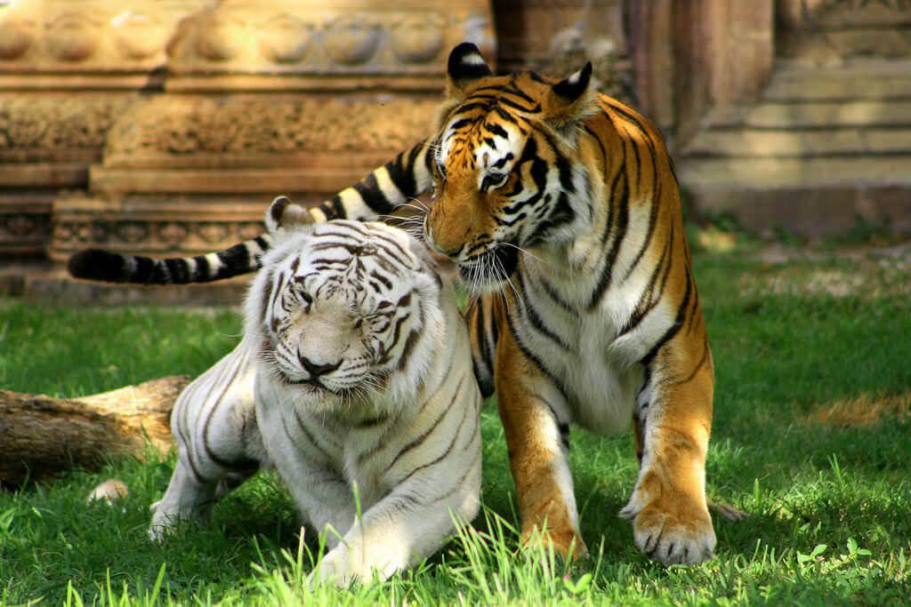 Zoo Miami - by Michele Eve Sandberg:Flickr