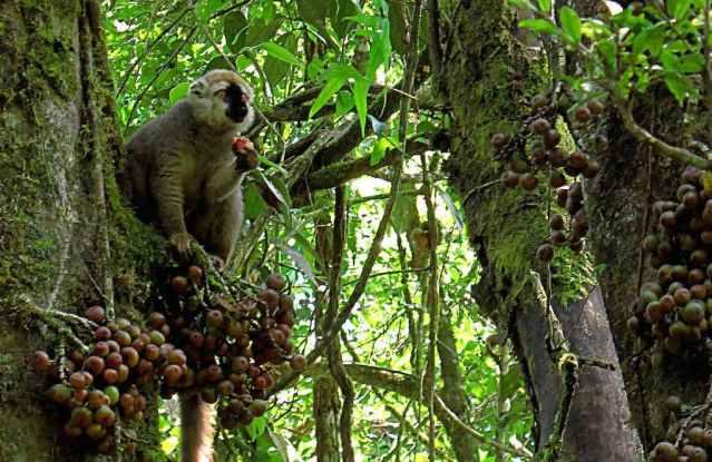 Ranomafana National Park, Madagascar - by Treemad Madagascar:Flickr
